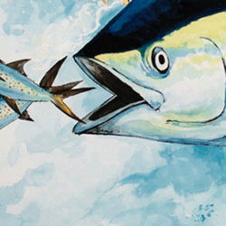 Yellowfin Tuna Illustration for Reelin' for Research